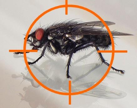 Tuer les mouches dans sa maison !