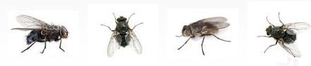 Eliminer les mouches